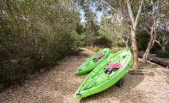COORONG KAYAKING